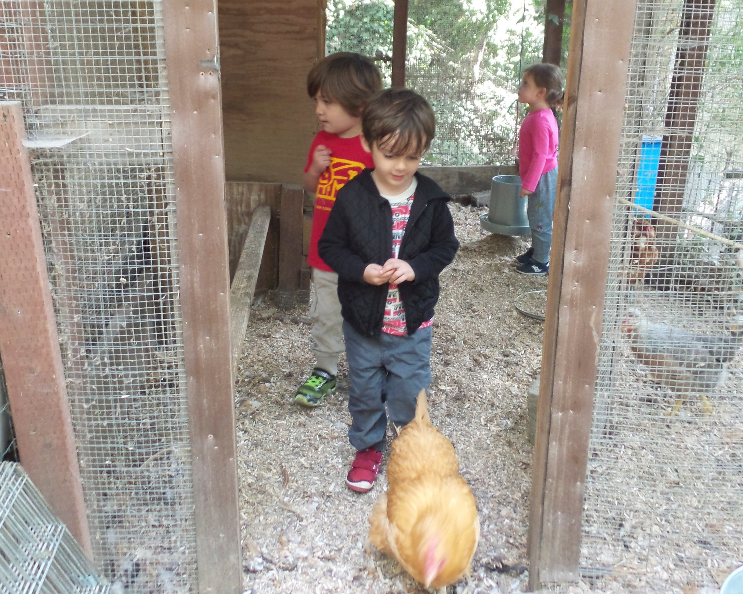NATURE AREA - This hilly area is home to the MCPC chickens as well as some gross-motor-skill activities like monkey bars.