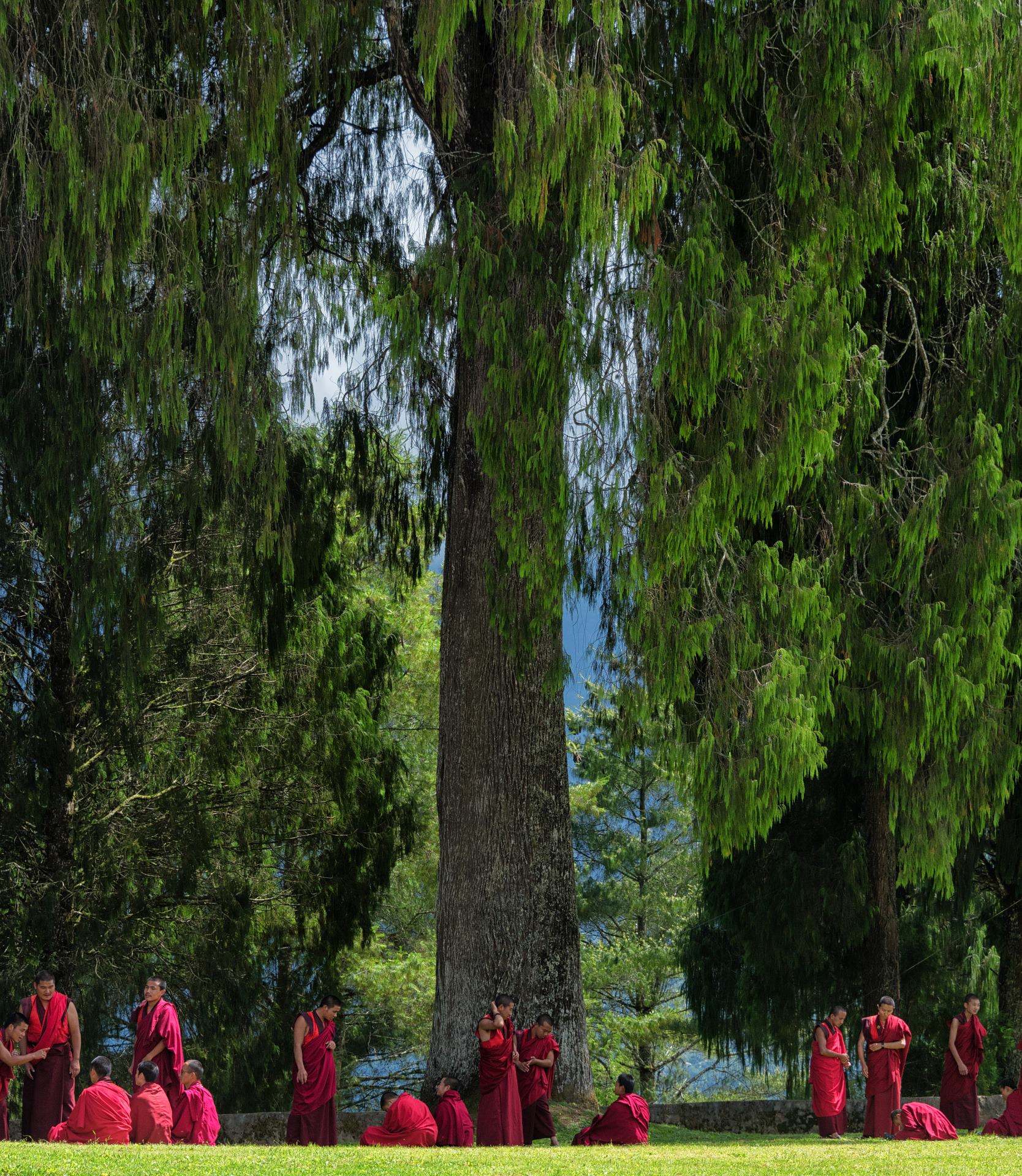 Monks debating on Buddhist Philosophy at Talo Monastery