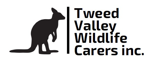 tweed valley wildlife carers (tvwc) - TVWC is a not-for-profit group, run by trained volunteers who spend many hours helping rescue and rehabilitate sick and injured fauna using methods and knowledge gained from many years of experience in the field.TVWC operates throughout the Tweed Shire.Murwillumbah Snake Catchers will rescue any injured reptiles free of charge and take them into care under the auspices of TVWC.