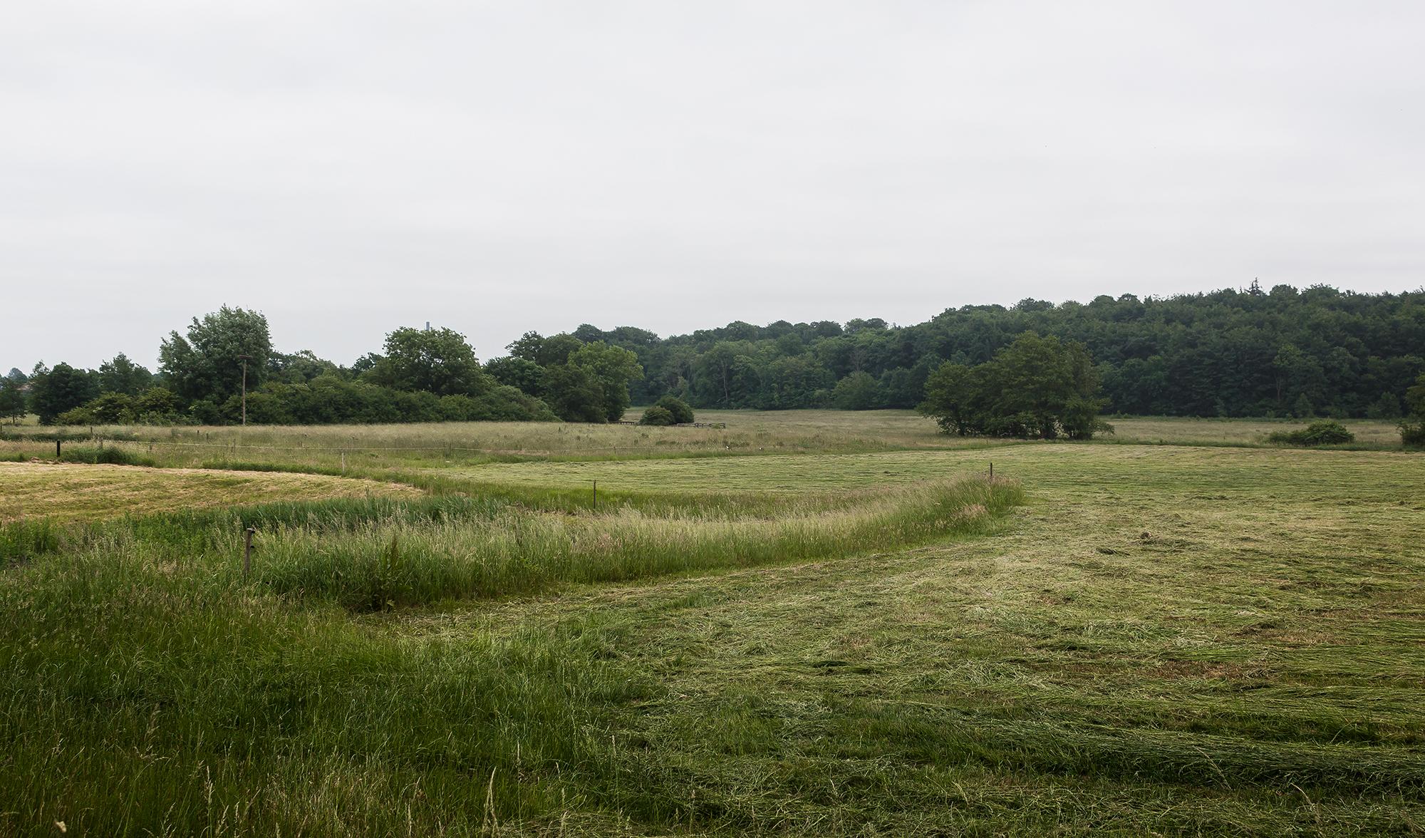 Green Fields - Mike Dugenio (1 of 8).jpg