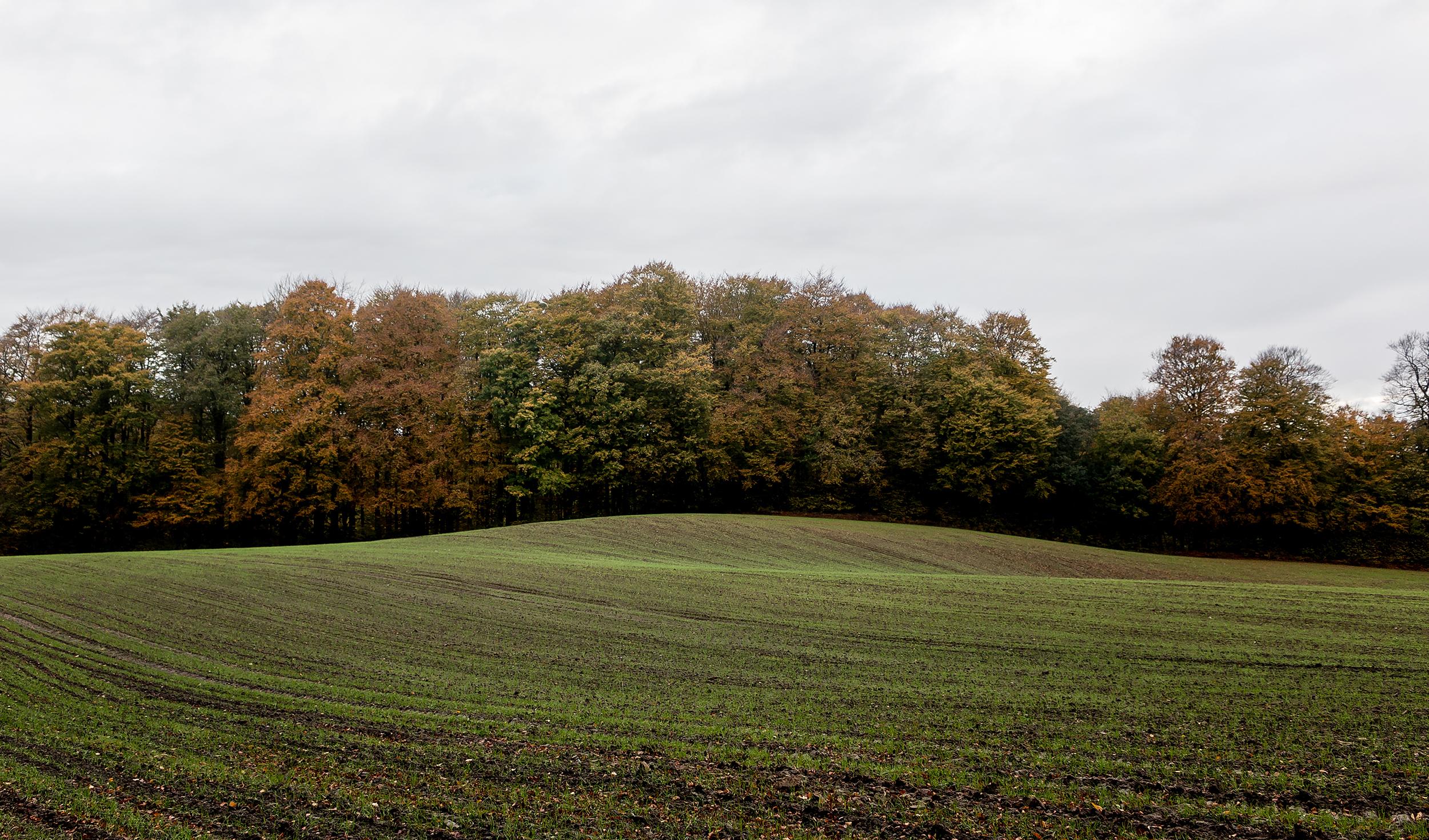 Green Fields - Mike Dugenio (2 of 8).jpg