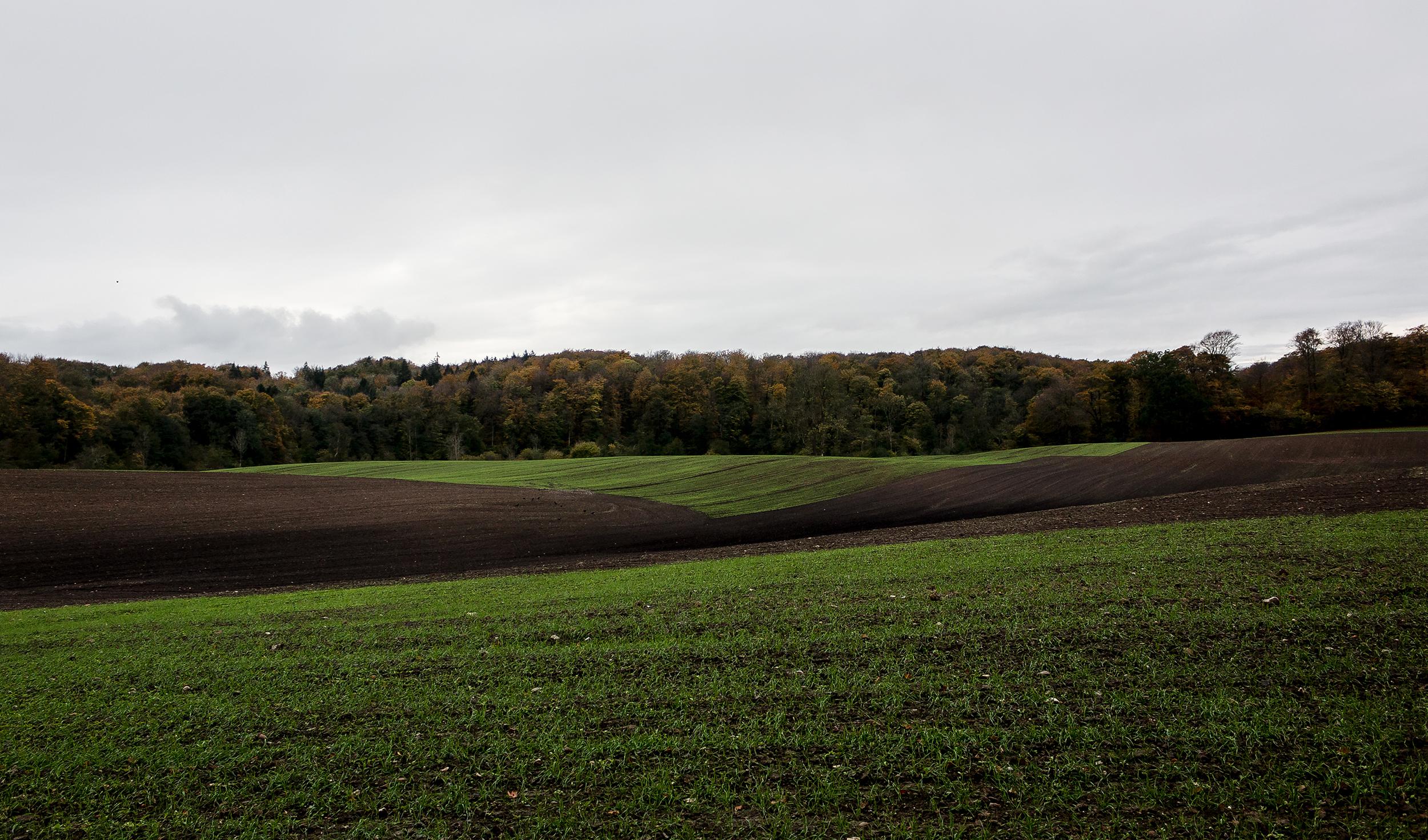 Green Fields - Mike Dugenio (4 of 8).jpg