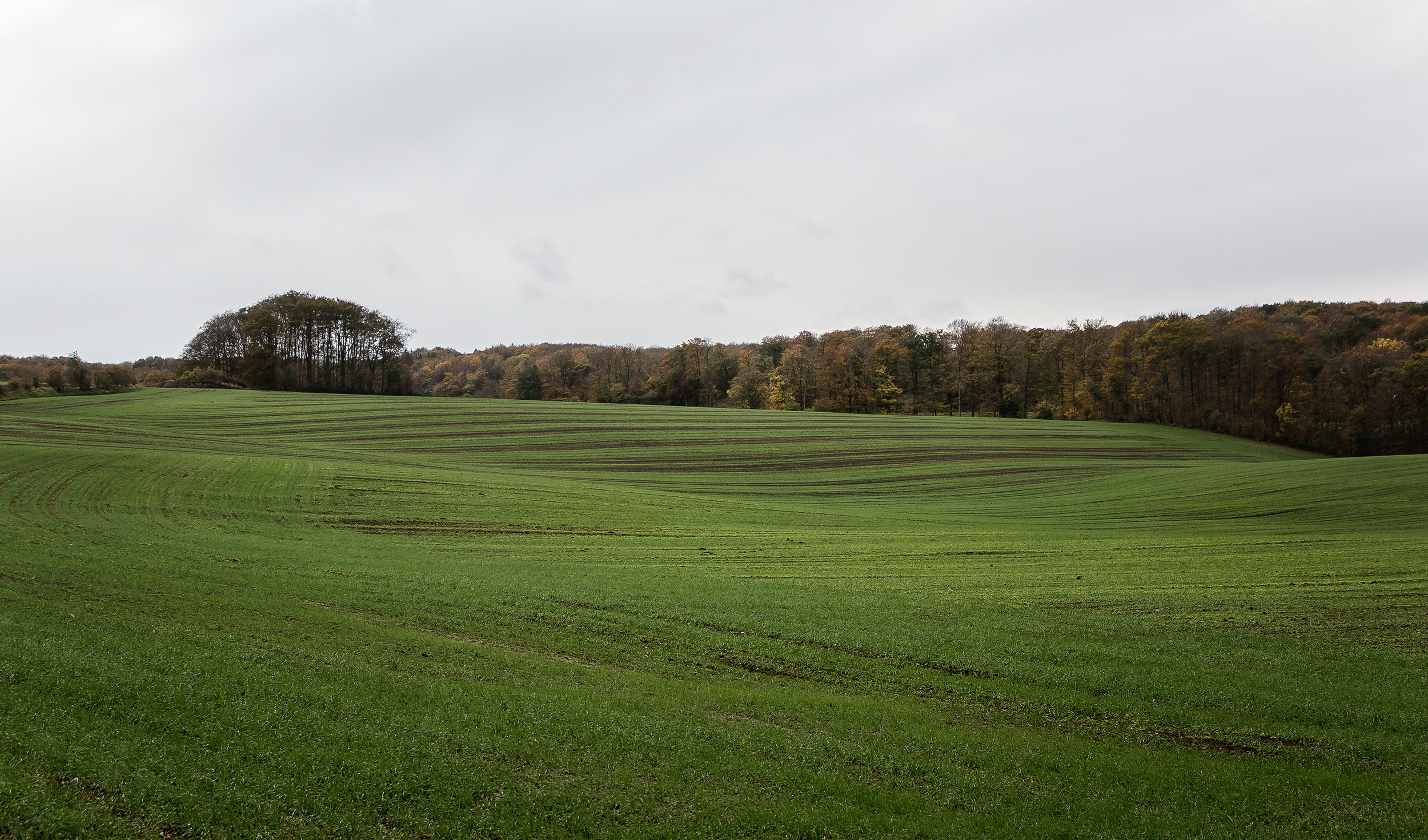Green Fields - Mike Dugenio (5 of 8).jpg