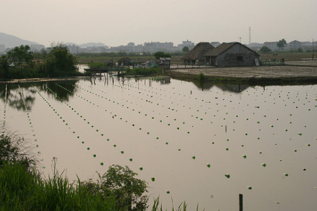 freshwater-pearl-farm.jpg