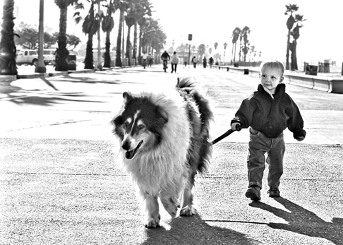 Week 15 - Dog Takes Boy For A Walk
