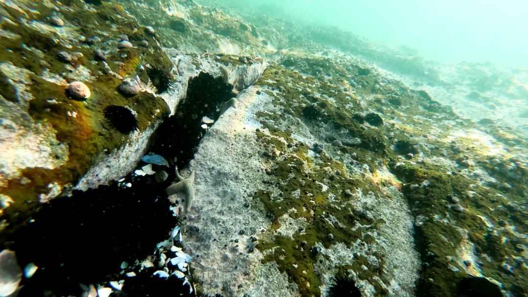 Em toda a onda perfeita de reef há sempre pedra perigosa. -