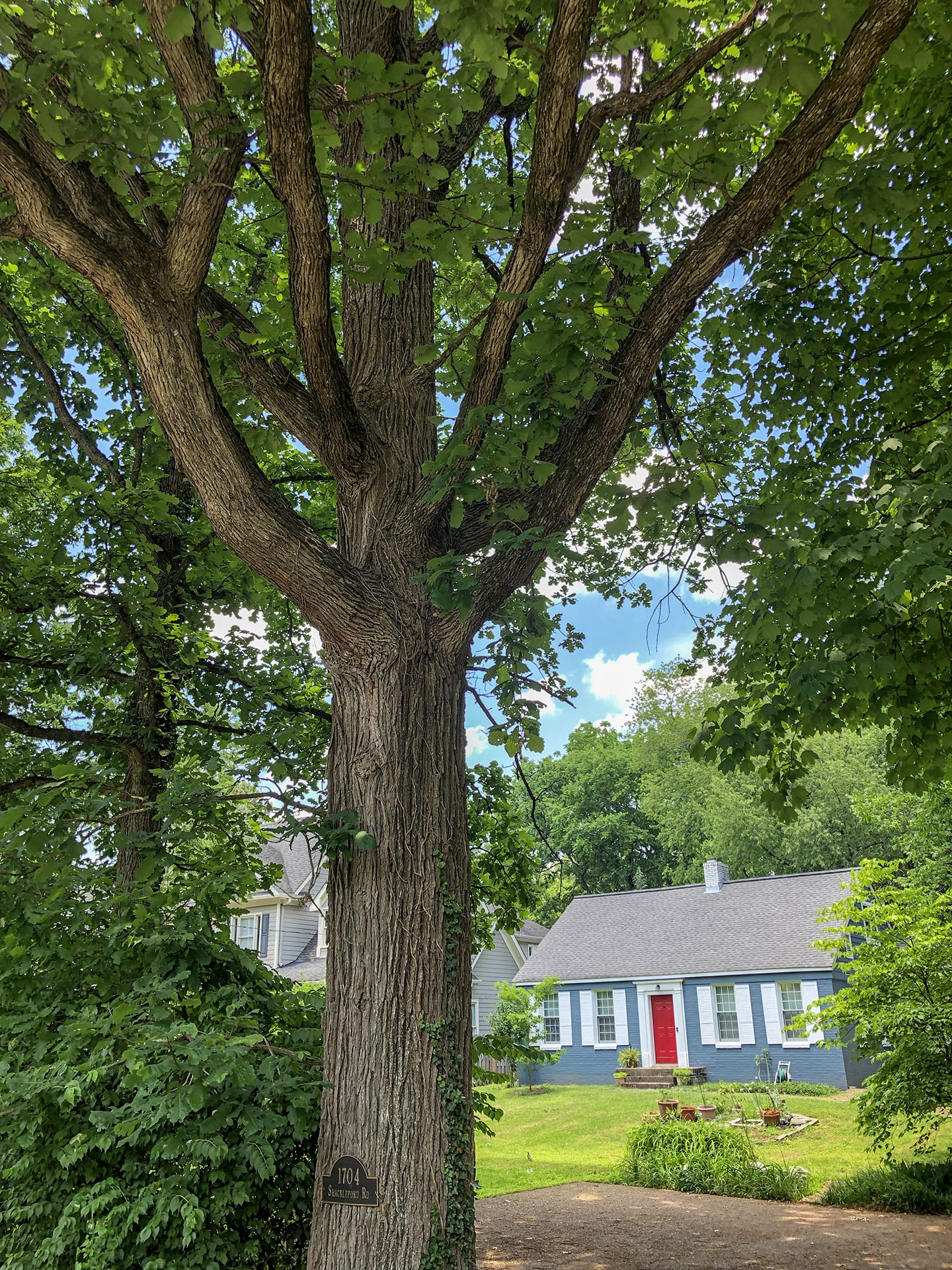 What's the Story of Trees in Nashville -