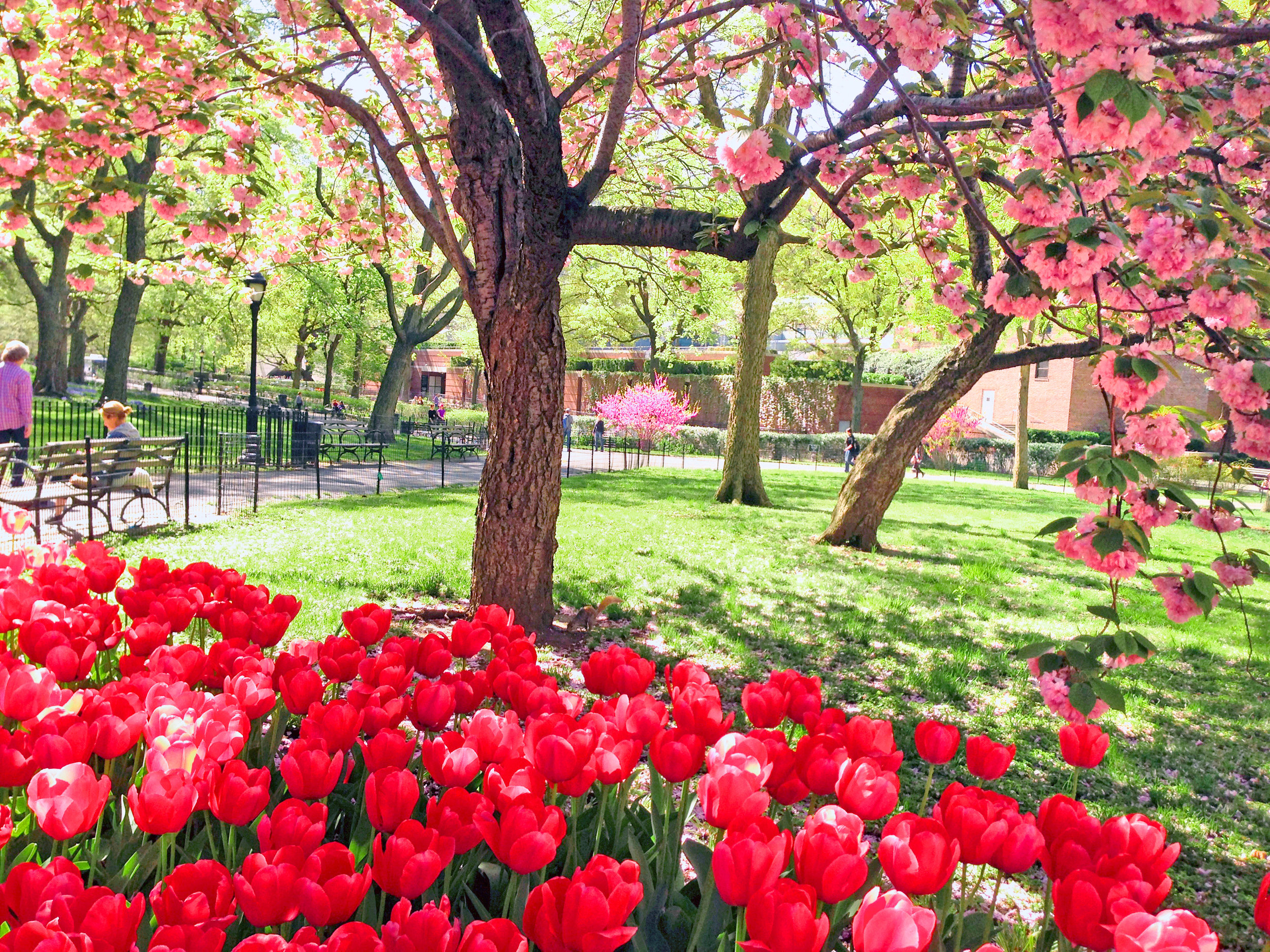 Flowers-in-Theodore-R-Park_edit.jpg