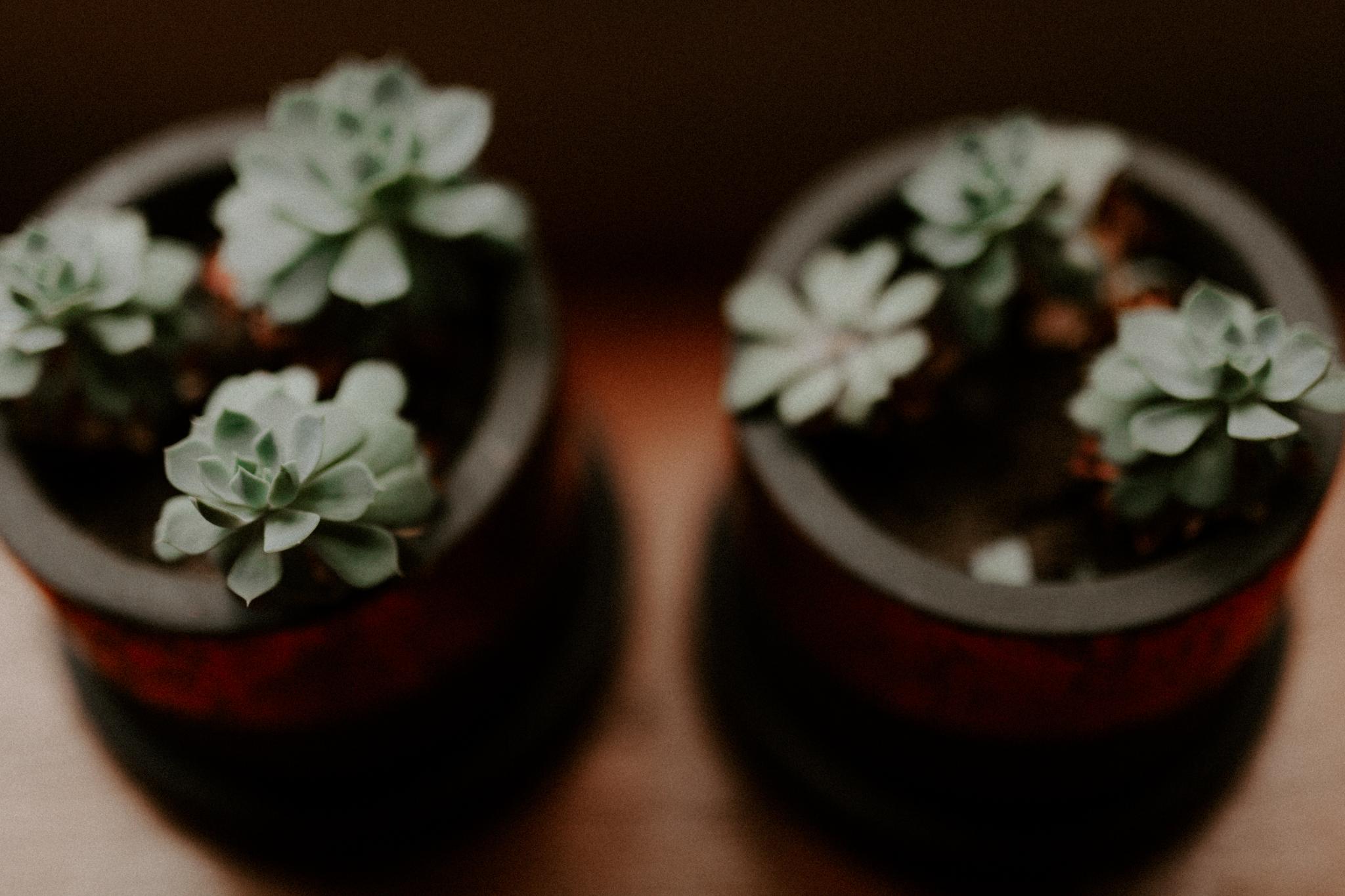 St-Kilda-Garden-Wedding-Emotions-and-Math-Photograph-020.jpg