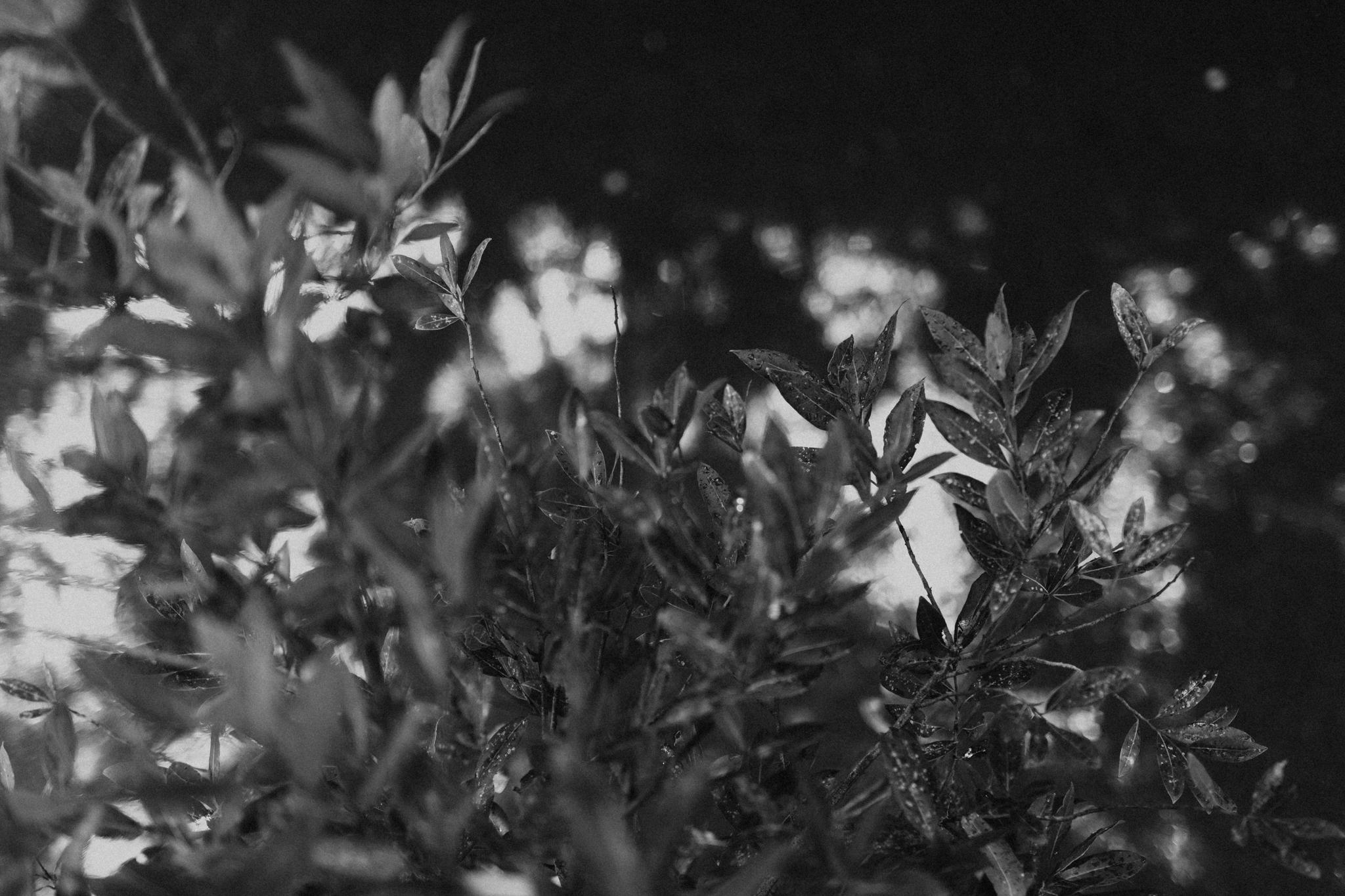 The-Terrace-Royal-Botanic-Gardens-Wedding-Emotions-and-Math-Photography-001.jpg