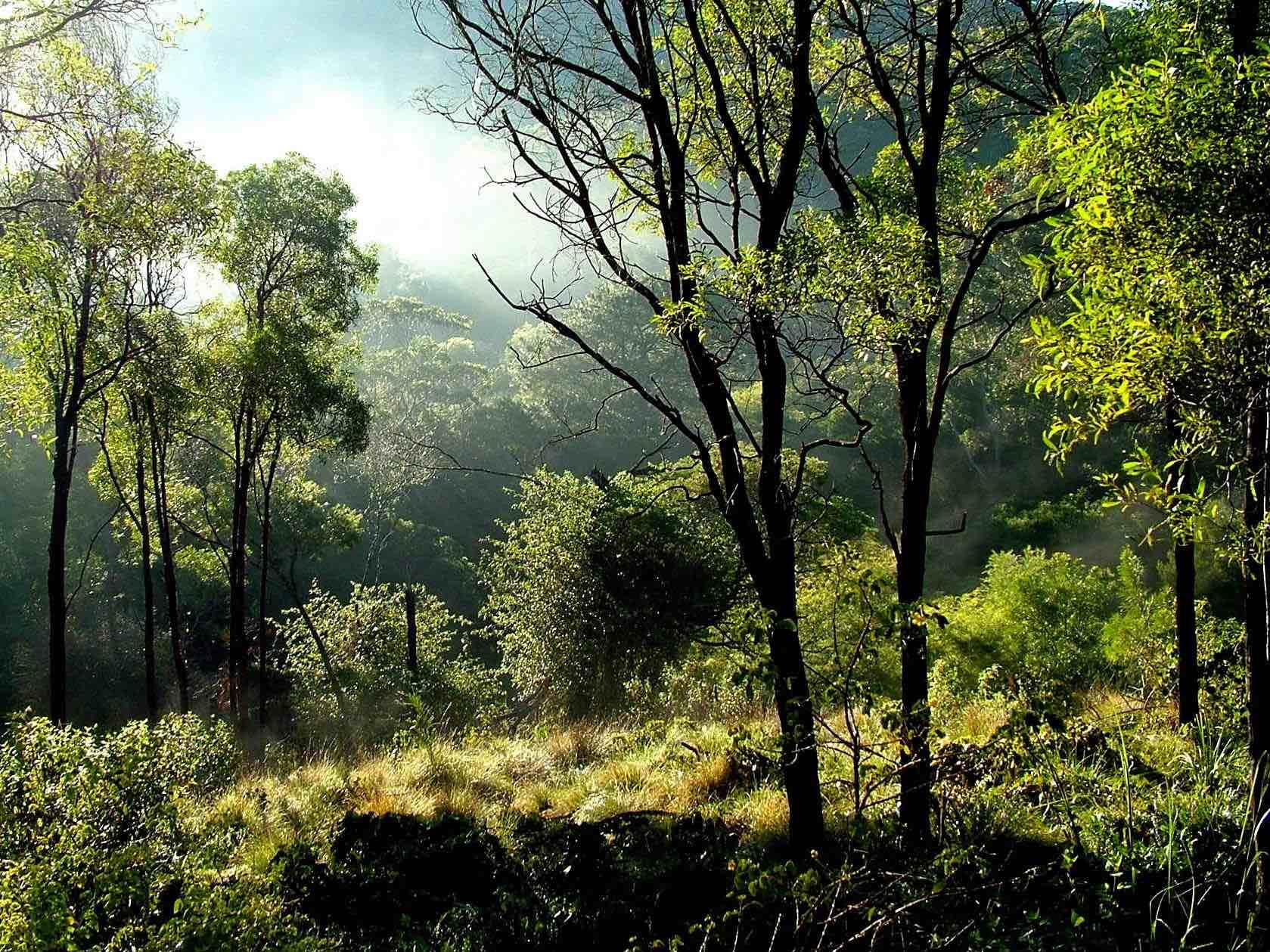 Nature 10.jpg