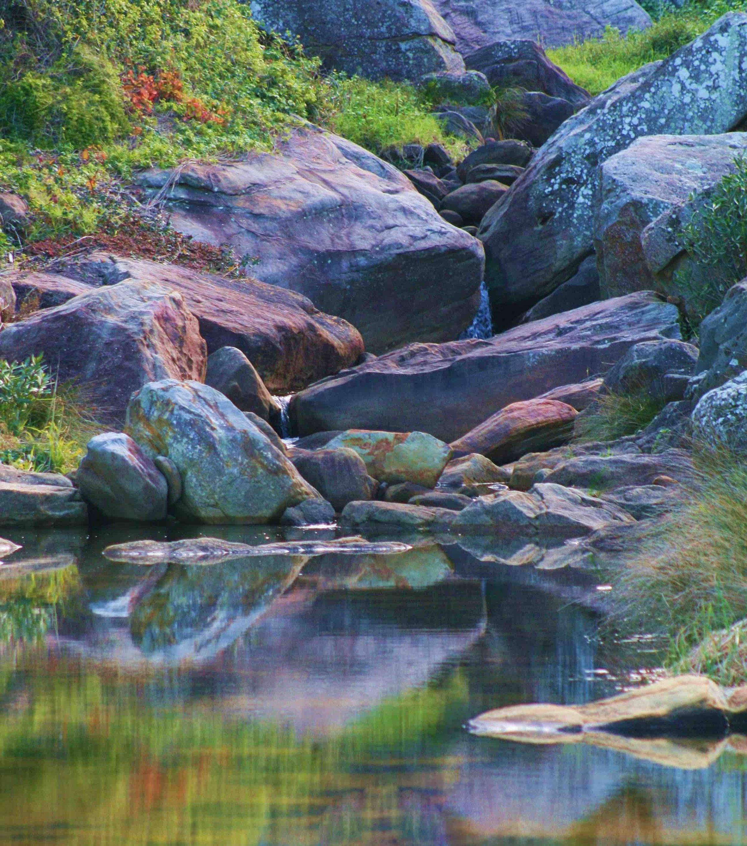 Nature 11.jpg