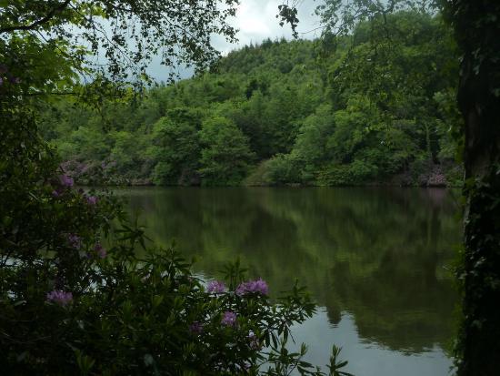 castlewellan-forest-park-1.jpg