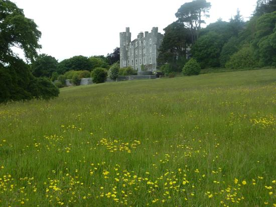 castlewellan-forest-park-2.jpg