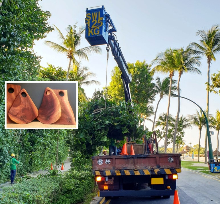 """NO DEFORESTATION, NO LOSS of NATURAL HABITATS : """"man-made"""" tropical paradise,  Sentosa Island  is landscaped to movie-set perfection. The hardwood cuttings are a great source for our   Artisanal / Shaped Cutting Boards"""