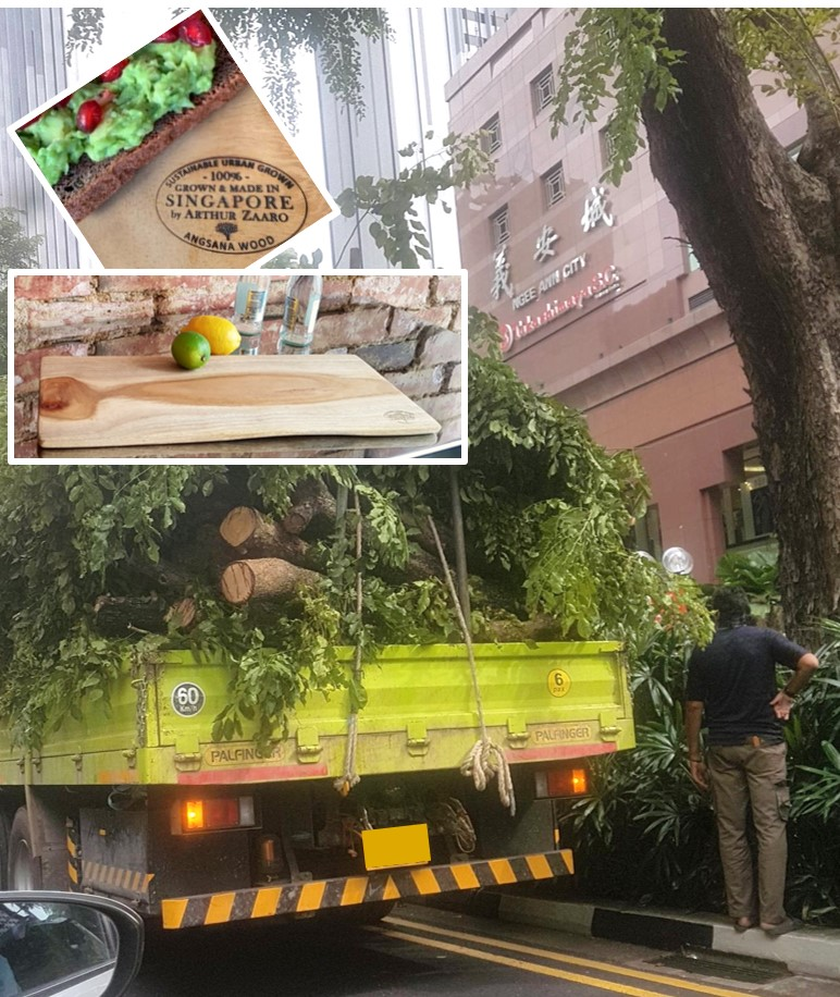 NO WASTE : small branches cut while trimming Angsana trees on the world famous  Orchard Road  shopping district are ideal as our   Cheese Boards