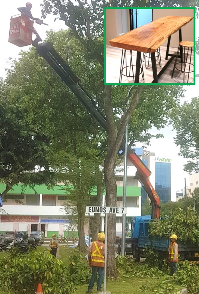SUSTAINABLE : Large branches cut in the  Paya Lebar  industrial area   made beautiful   Benches & Bar Tops