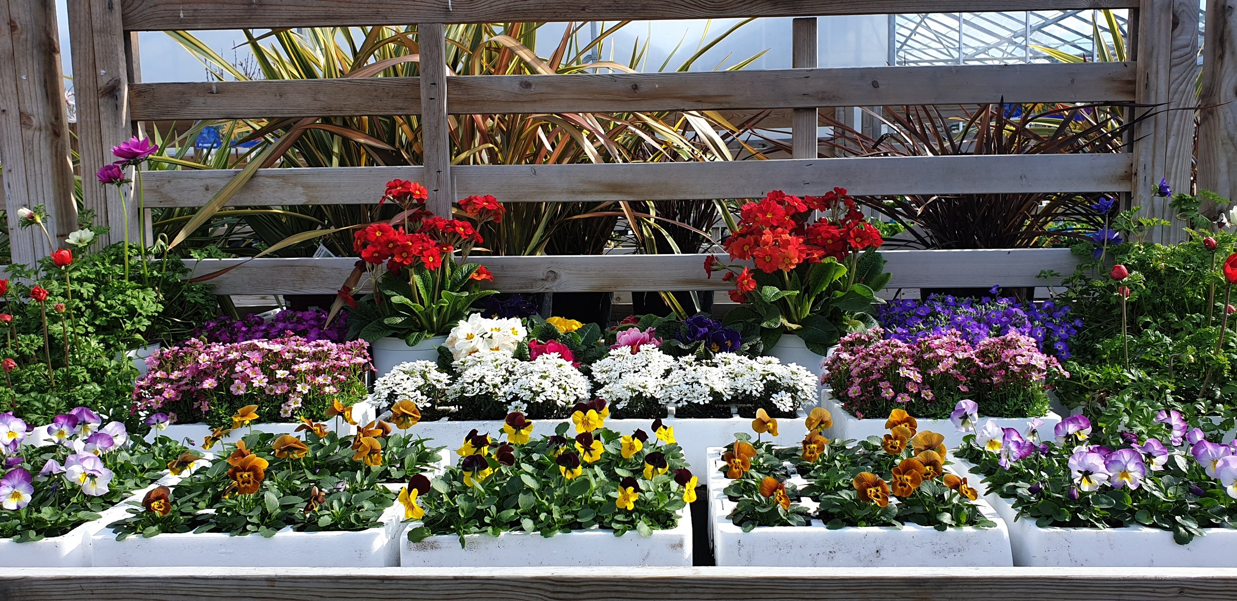 High quality plants grown year round with everything you need for them. -