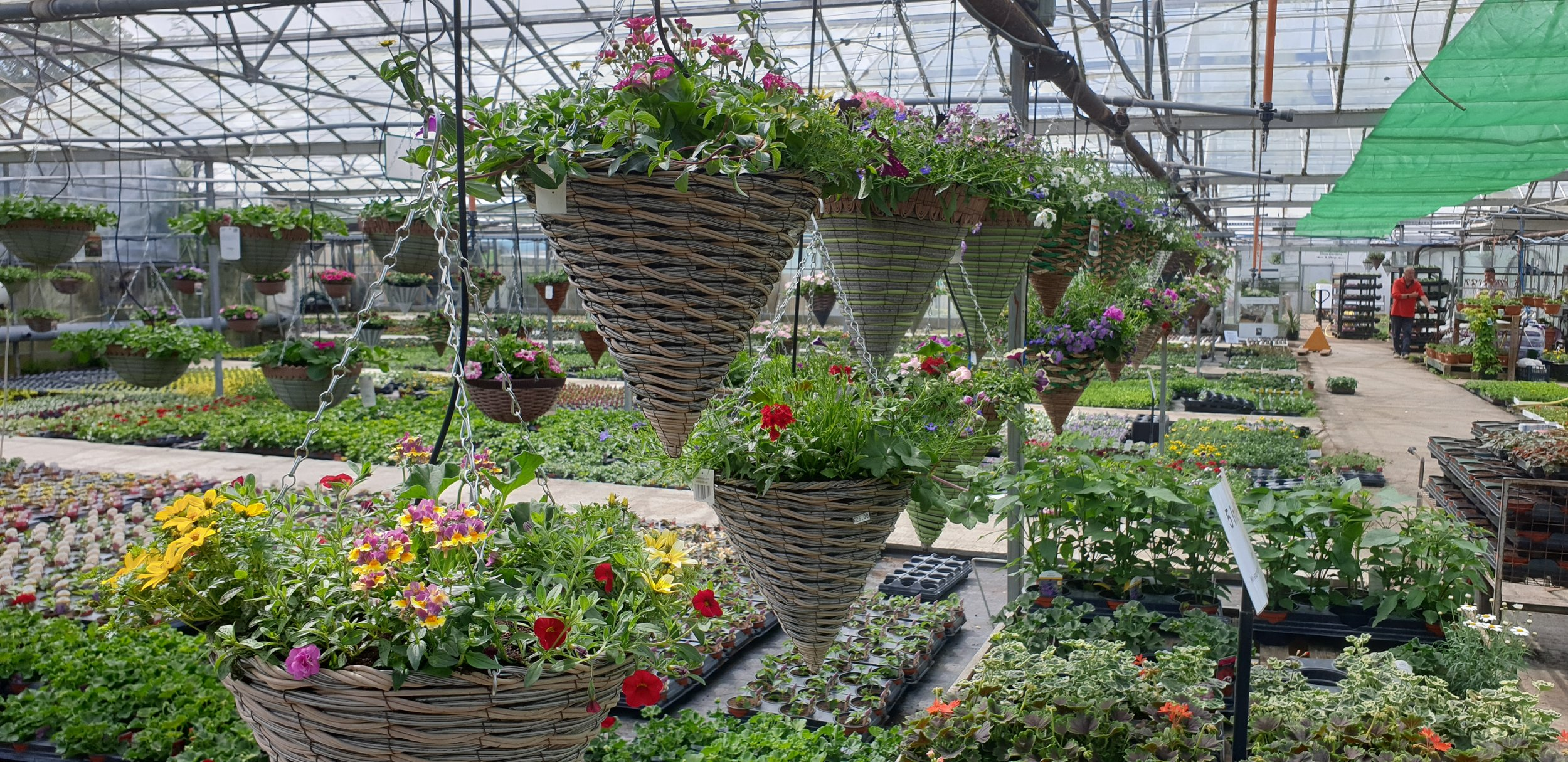 We Specialise in hanging baskets. - If your in need of great, lasting baskets that get better with time, visit us and take your choice. We only use home grown and repeat flowering cutting raised plants.