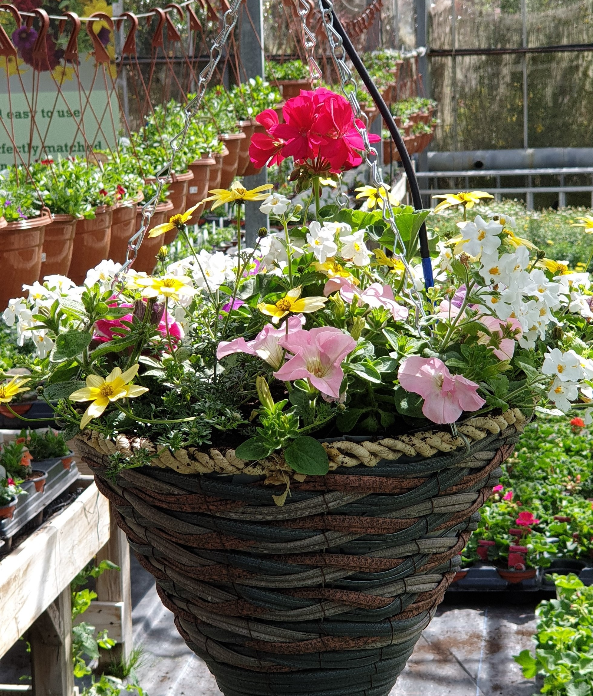 We offer hanging basket refills. - If you've already got a basket or you want to refresh one that's looking rather tired, bring them in and tell us what you would like.If you want your baskets to have a new lease of life, bring them in and you can order a refill for the summer or the winter, any size and shape. Tell us what colours you like and we guarantee that you will have a great looking basket.Dependent on the time you bring us your baskets, specific deadlines may not be available due to high demand. We will call when your basket is ready to be hung outside.