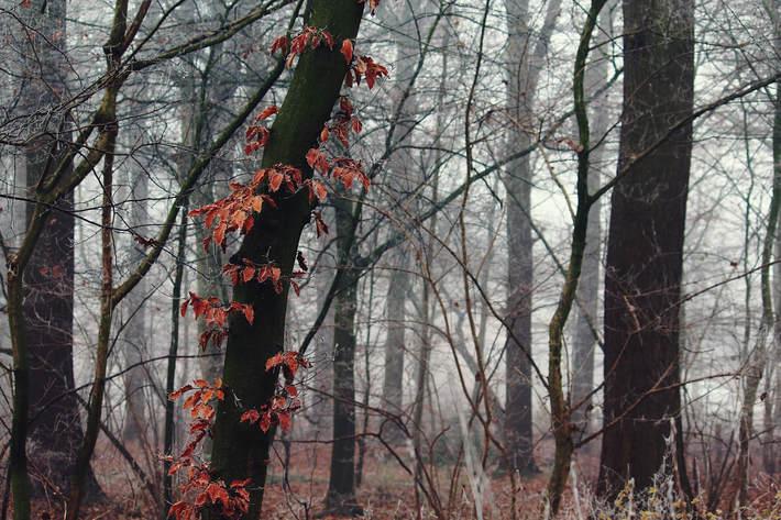 fog-1901410-1920_1.jpg