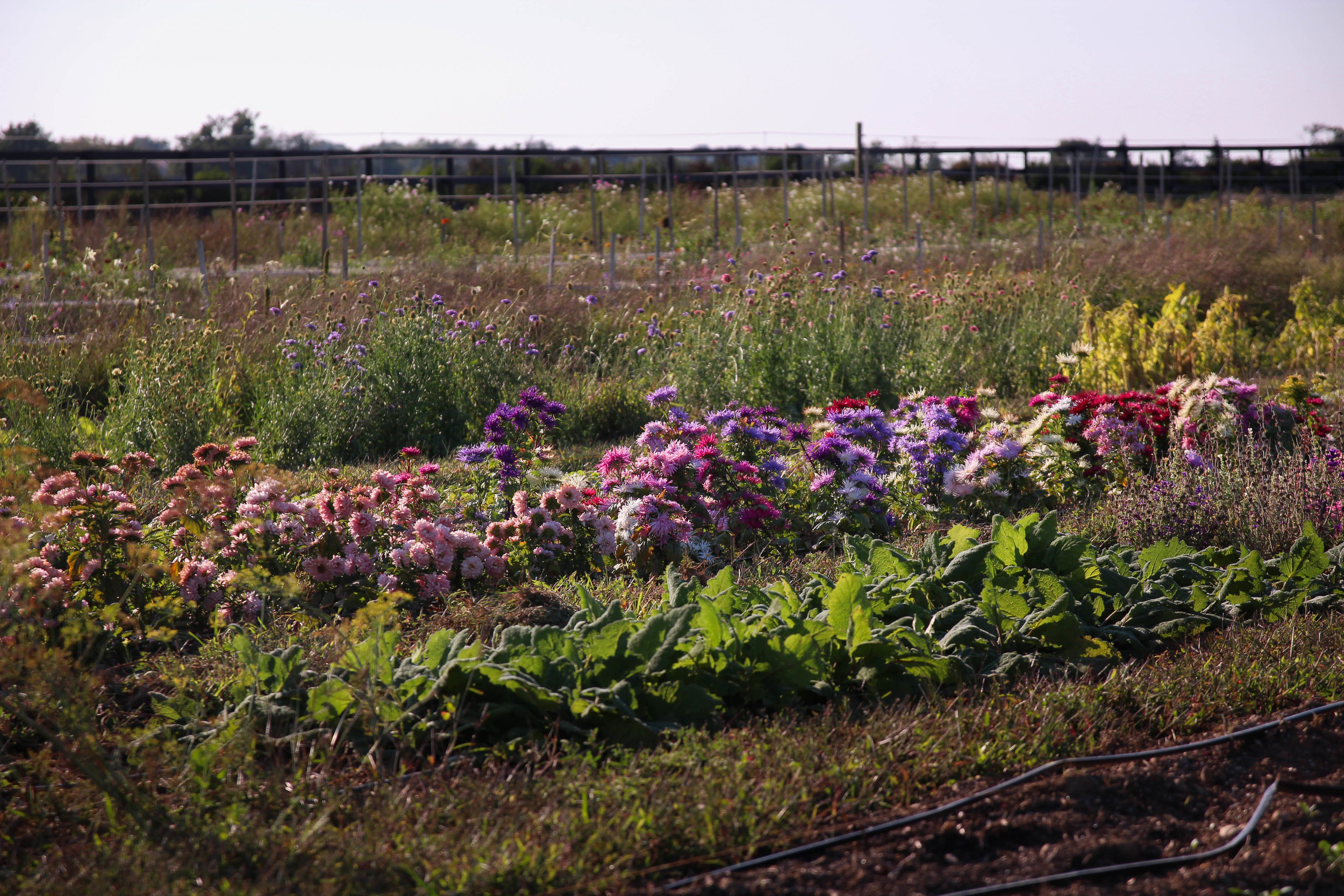 credit north fork flower farm3.jpg