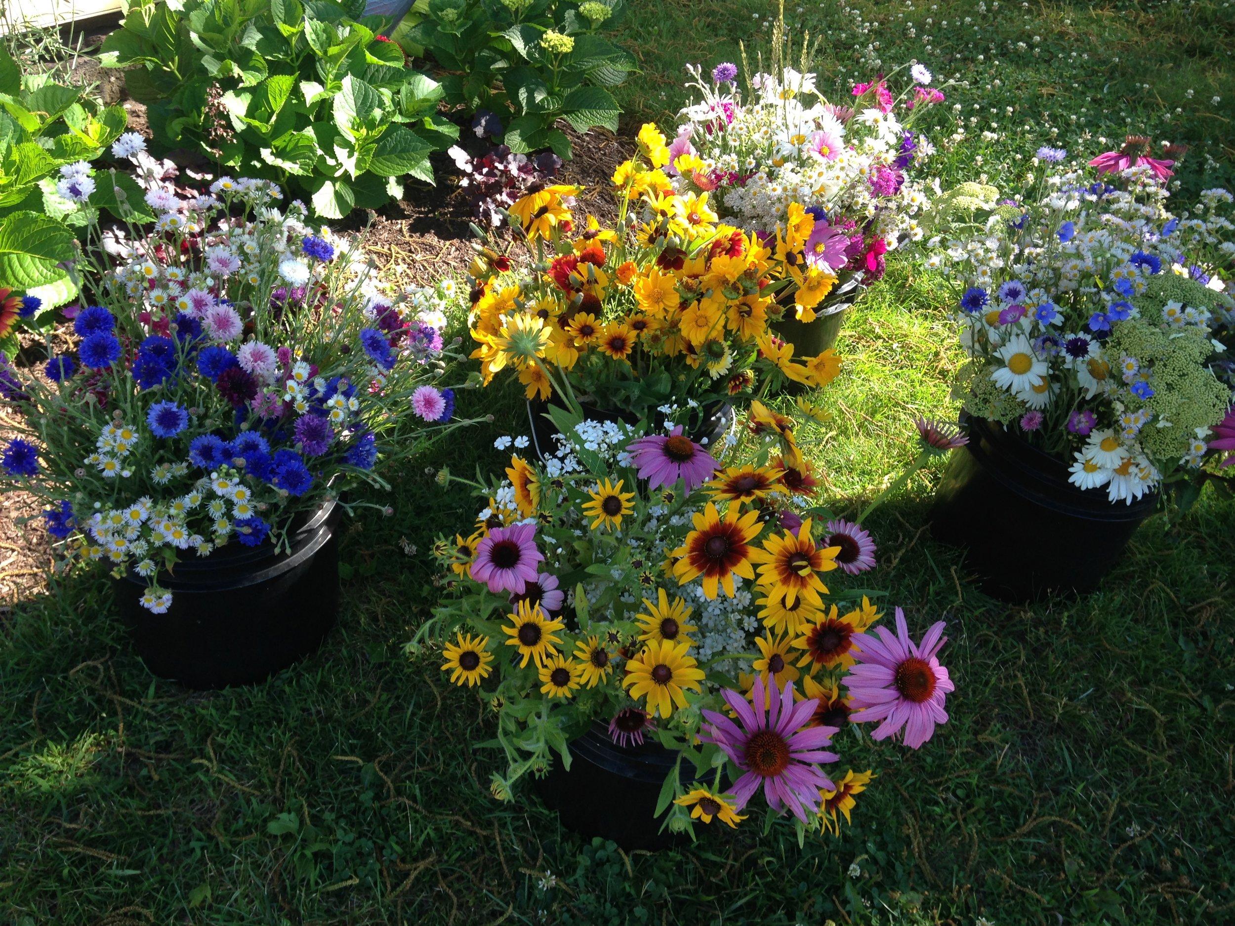 buckets of wildflowers.JPG