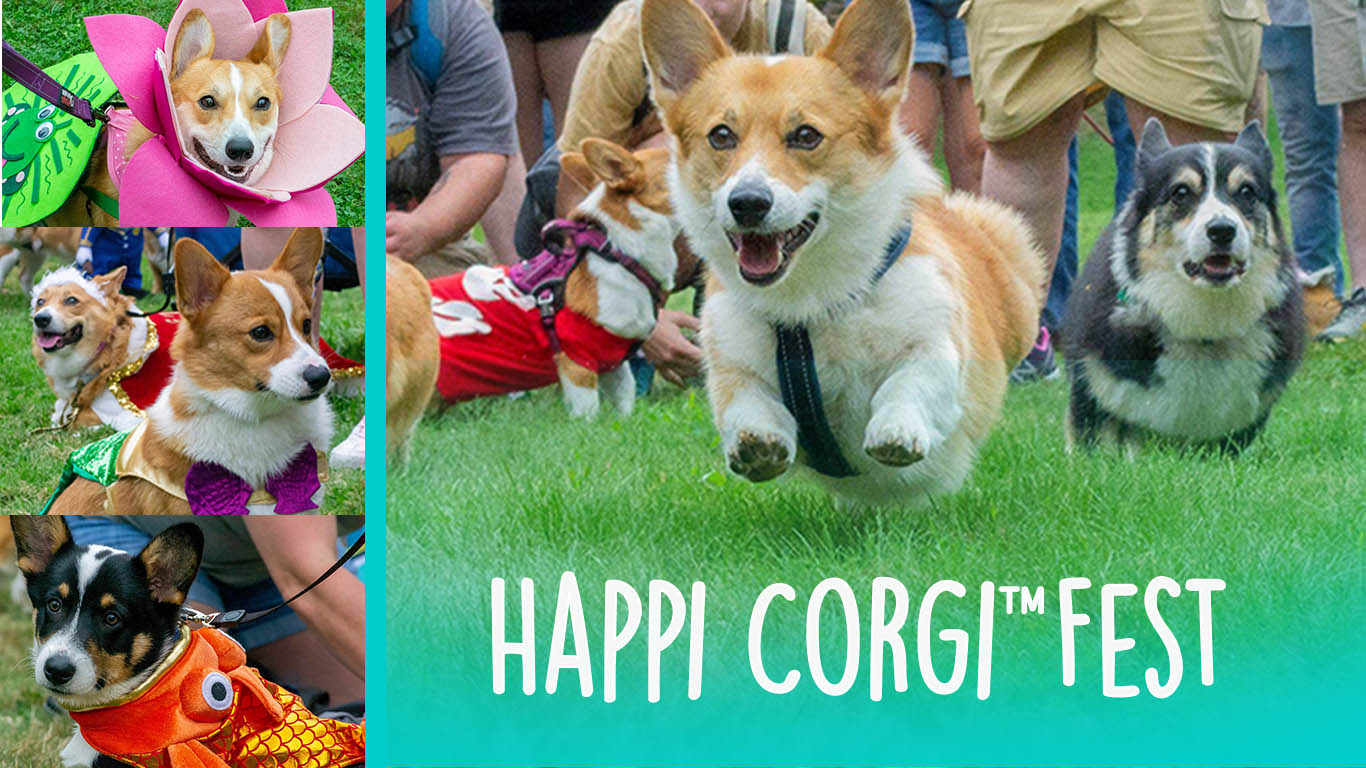 corgi fest cover artwork website.jpg