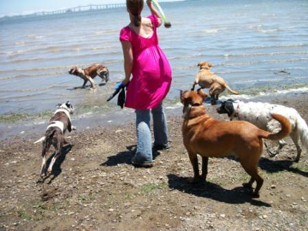 dogs beach 027.JPG