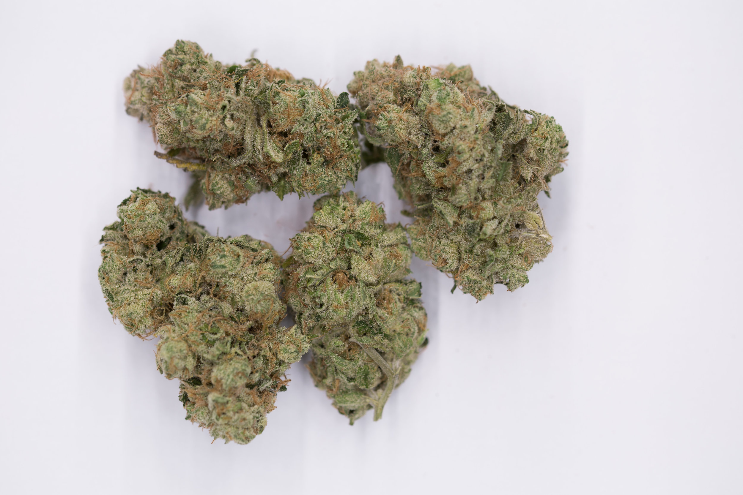 Meowy Website Pics - Kosher Kush-3476.jpg
