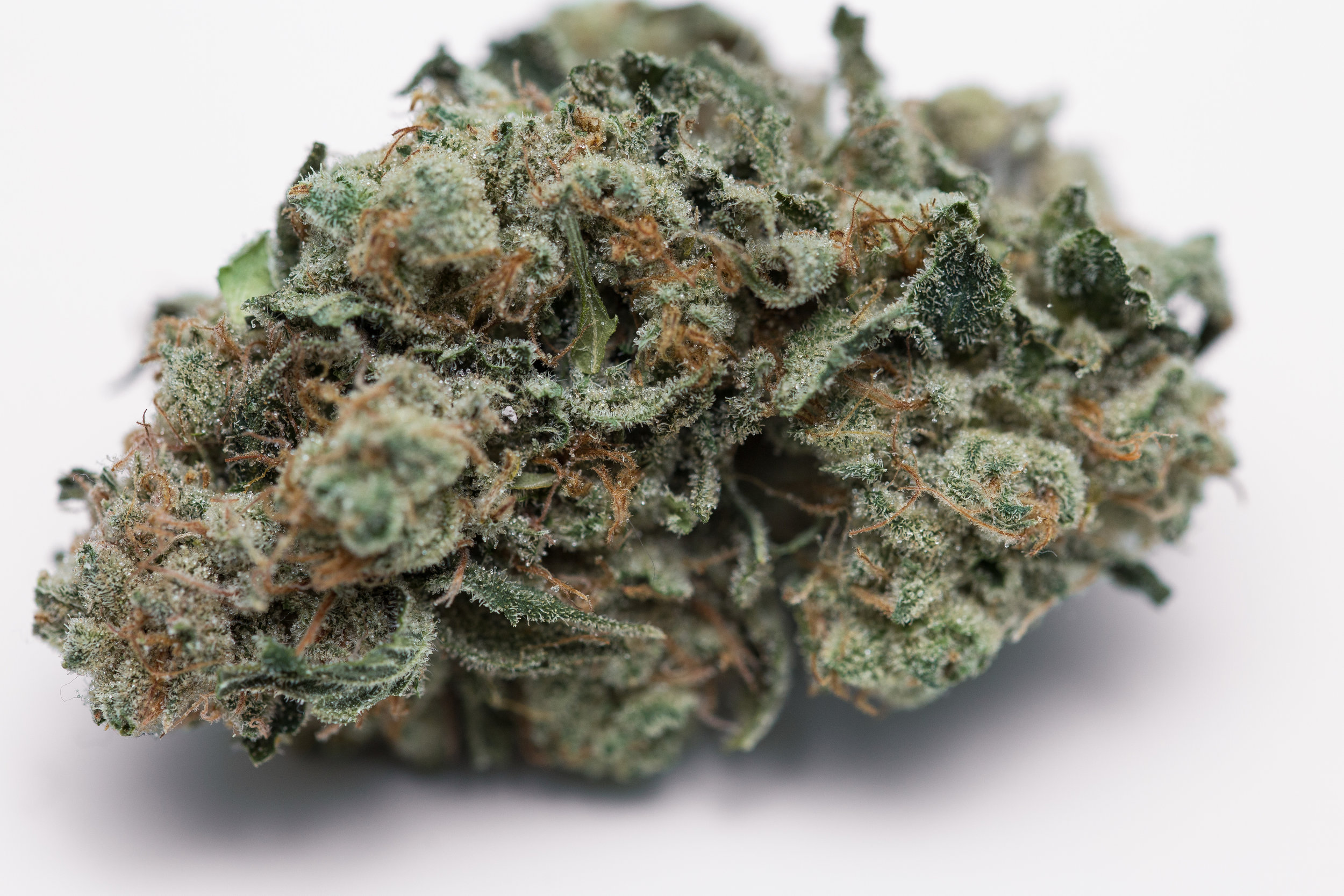 Meowy Website Pics - Kosher Kush-3454.jpg