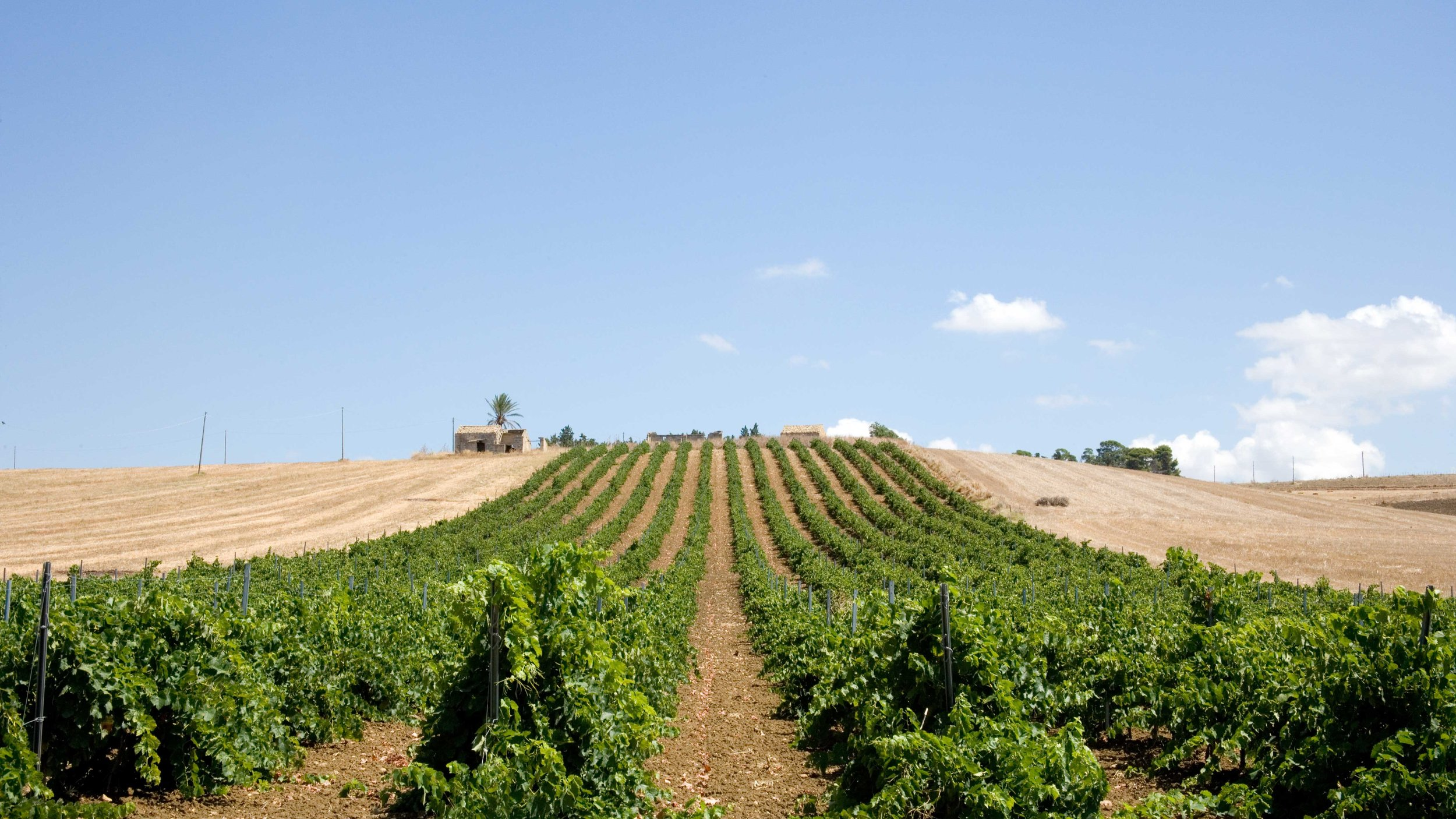 Vino-Sicily-Sicilie.jpg