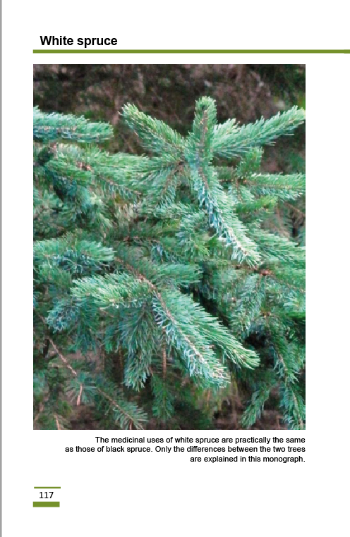 white_spruce2.png