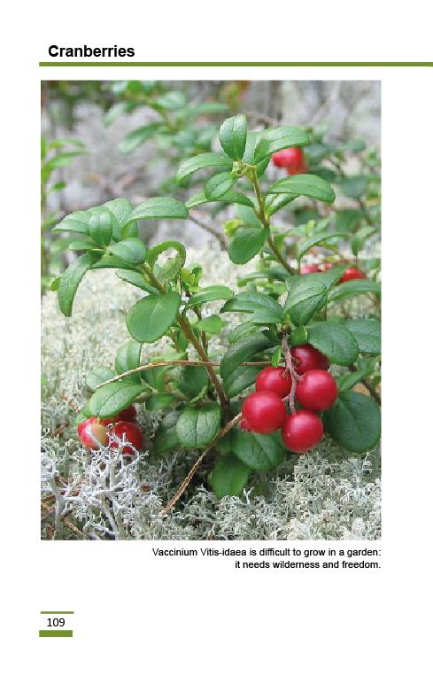 cranberries2.png