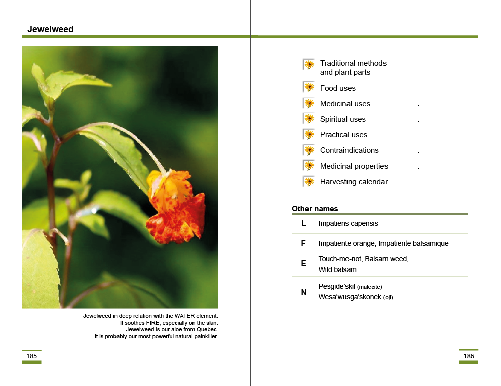 jewelweed.png