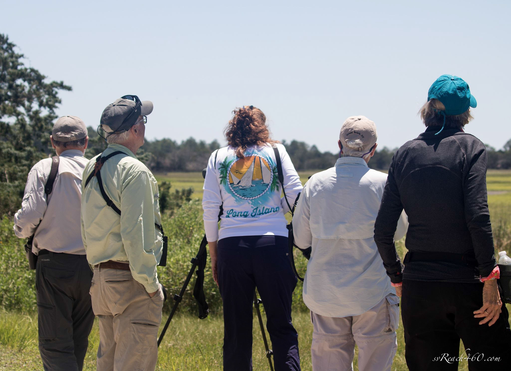 Viewing whimbrels in the scope