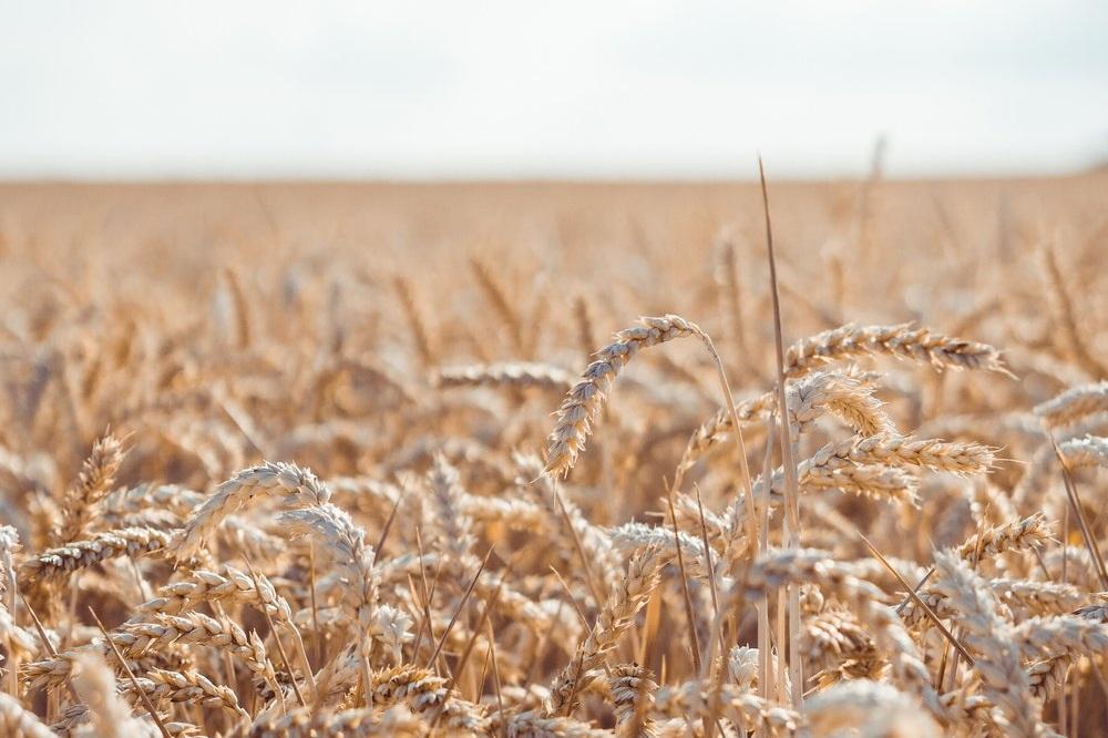 White Harvest Energy