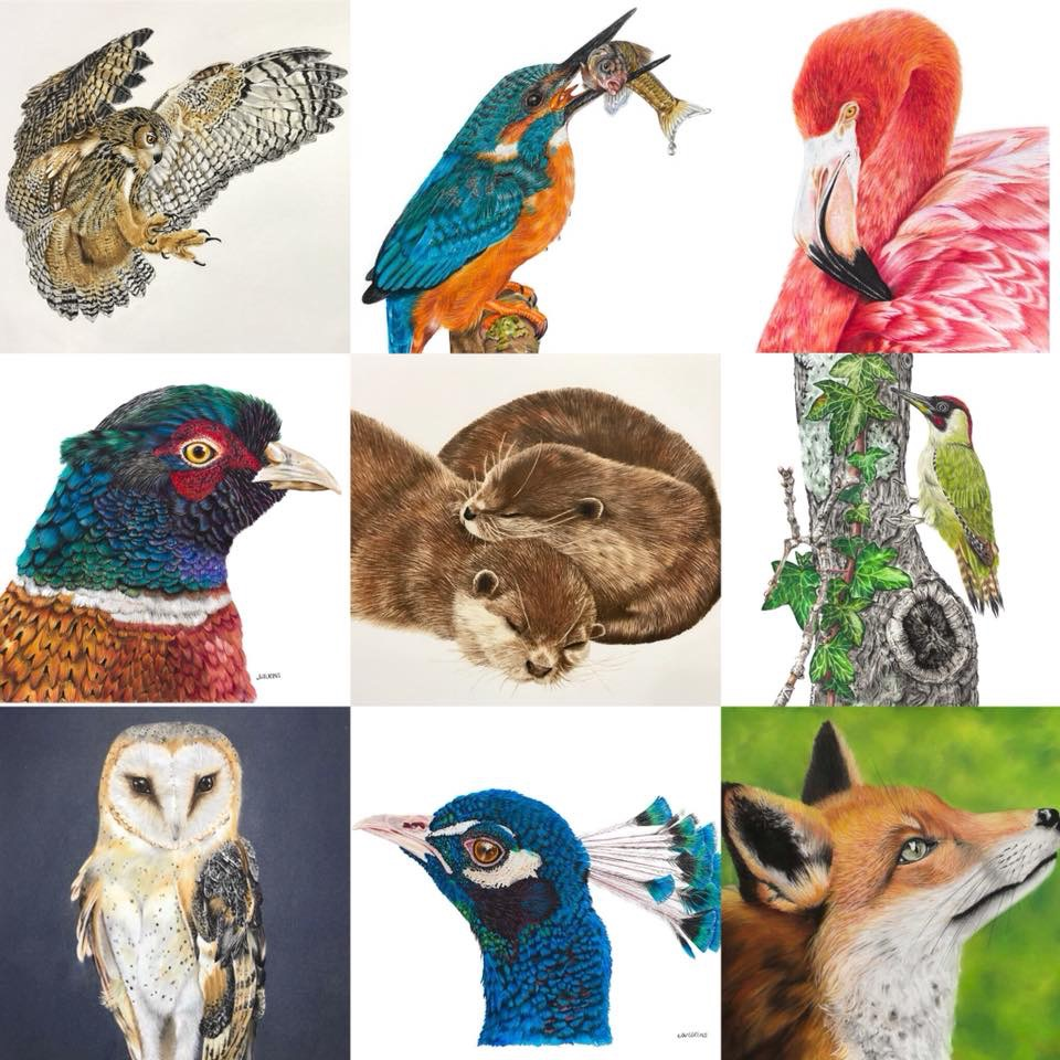 Janine Wilkins Art - wildlife artist - I love wildlife, nature and photography and have combined my love of drawing and painting to create detailed, realistic coloured pencil, pastel pencil and acrylic painted artwork.I am a realist artist, studying my subject in detail, creating a lifelike drawing portraying character and mood. Coloured pencil art is one of the slower art mediums, it takes many hours to create a finished piece. (My eagle owl drawing took 30 hours to draw.) If it looks like I have drawn in every hair, or feather, then literally I have done just that! It is a very precise medium, lots of layering of colour and sharp pencil points!