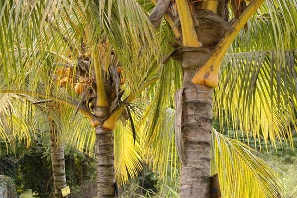 24-palms.jpg