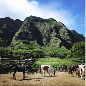 Windward-retreat-horseback-ridding.jpg