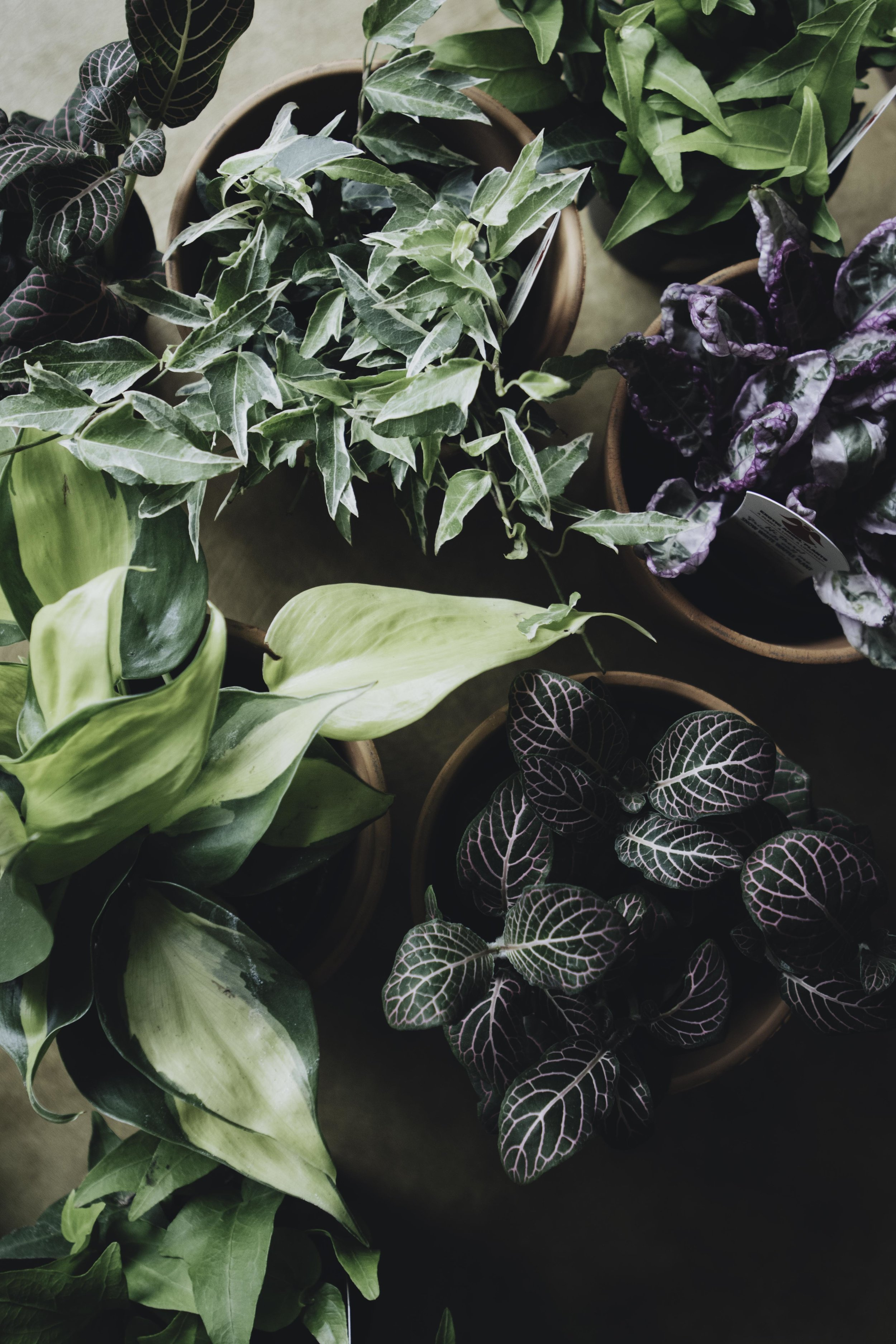 Plants 18.jpg