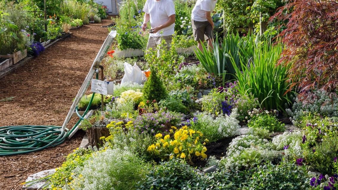 Gardening could be the hobby that helps you live to 100 - BBC / Read