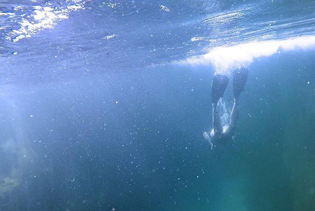 One breath. Feel the push. Wawken will take you further. . . . . . . . #wawken #wawkener #snorkeling #freedive #freediving #scuba #scubadiving #onebreath #clearwater #underwater #underwaterphotography #underwaterphotographer #underwaterworld #getoutdoors #explore #explorergear #discover #discoverocean #experience #ourblueplanet#startup