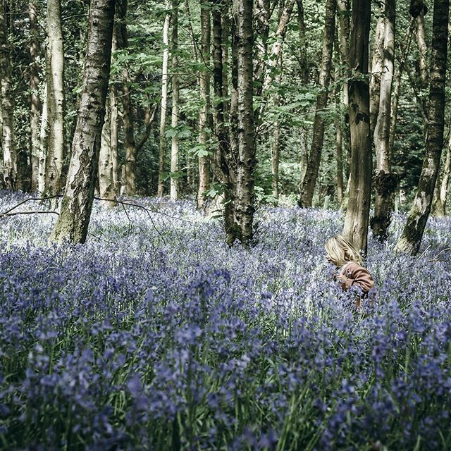 Hello folks, it's been a while 👋🏻 I took this photo back when there were bluebells so a few months ago now.  I have been so preoccupied with writing my book and worrying about life in general that I have had little time or energy for anything else.  It seems like since April I have gone from worry to worry, each time they have felt like the most important thing, and I have been all-consumed by anxiety, then it has all turned out to be okay. It's so exhausting worrying about everything with as much commitment as I do!  I want to talk more about what worrying full time has been like for my mental health, but in the meantime  I have finally written about how I have found the process of writing a book. (Link in profile)  Will share the cover of the book over in stories too so do hop over for a look and I would love to know what you think. #slowlivingforlife #mentalwellbeing
