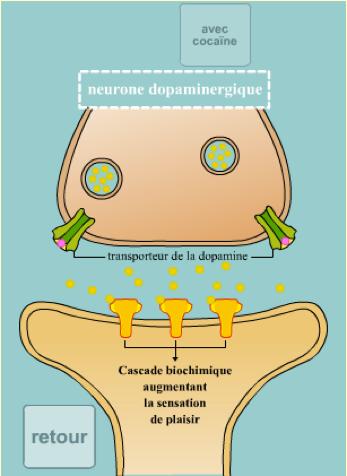 alix-le-calvez-nutrition-diecc81tecc81tique-lyon.png