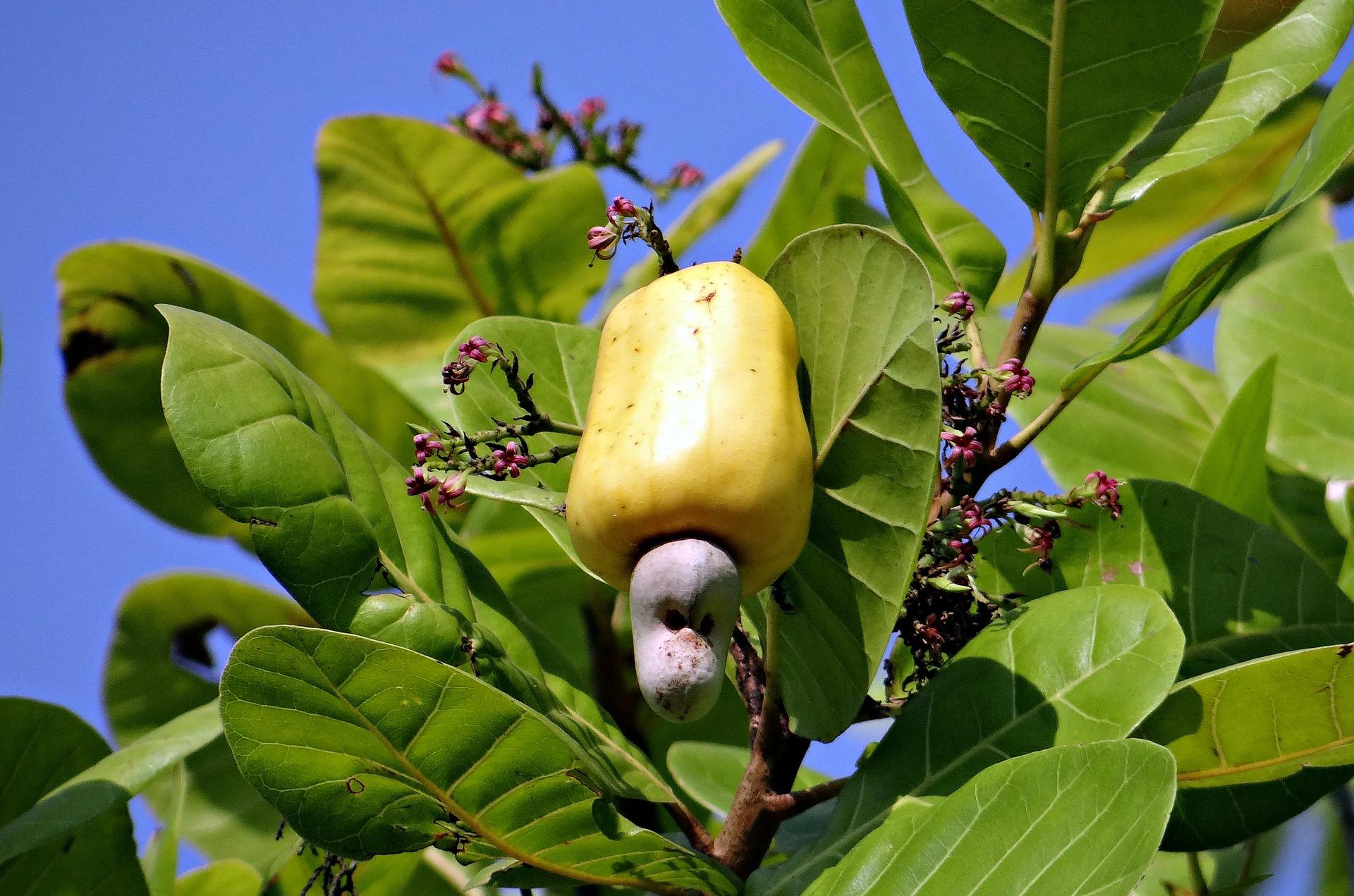 cashew-nuts-322556_1920.jpg