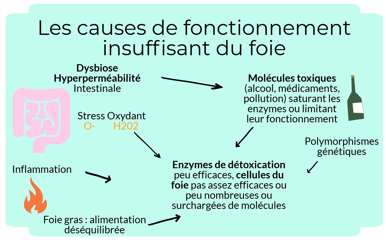 alix-le-calvez-diecc81tecc81ticienne-nutritionniste-bordeaux-4-e1550564340275.png