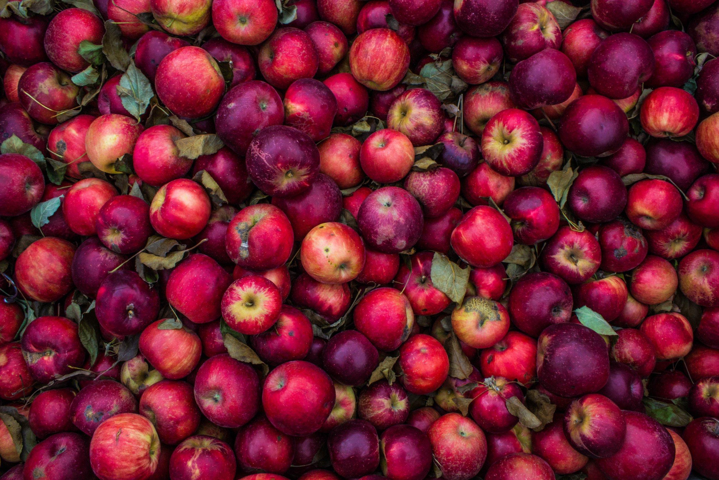 Tarte aux fruits à IG réduit par Alix Le Calvez Diététicienne Psychonutritionniste