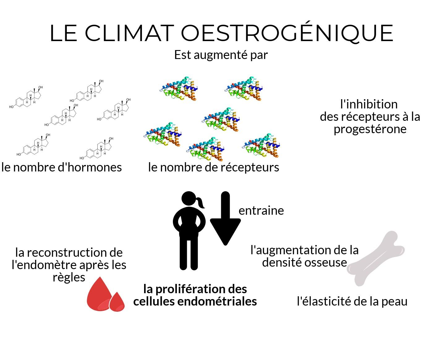 endométriose et phyto-oestrogènes par Alix Le Calvez Diététicienne Psychonutritionniste