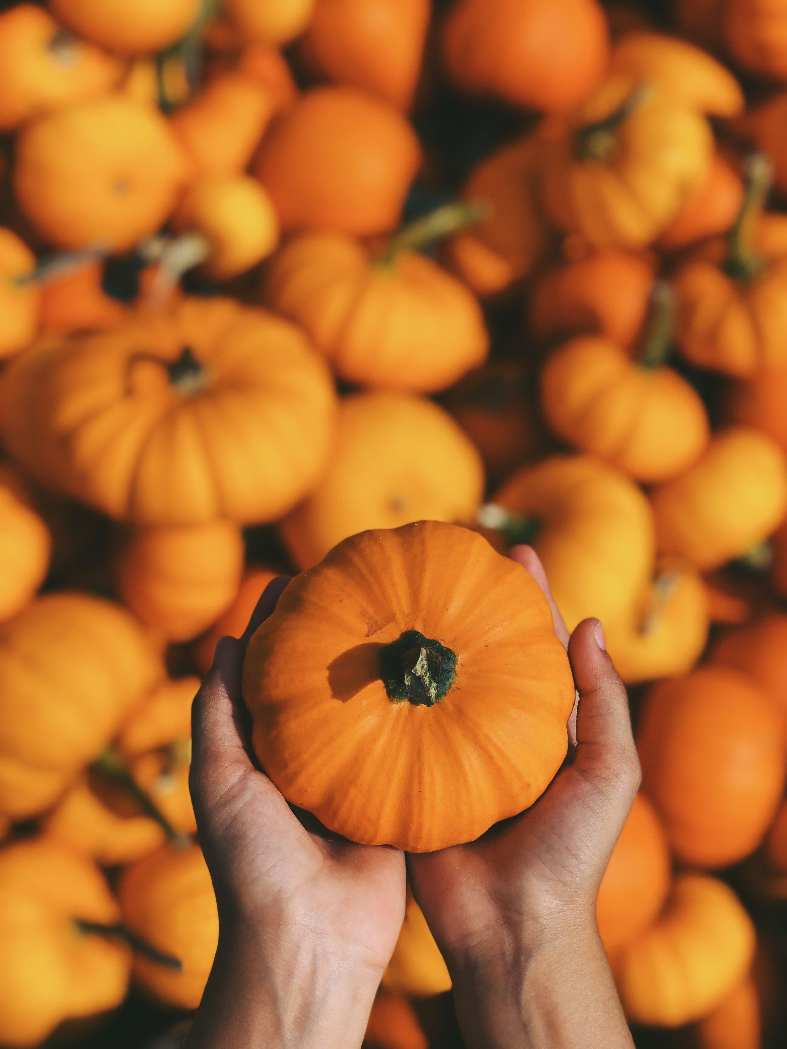 """Camaïeux de forêt d'automne - """"Petite feuille verte bouge dans l'arbre, petite feuille jaune vole dans l'air, petite feuille orange dort dans l'herbe. Chut ! voici l'Automne."""""""
